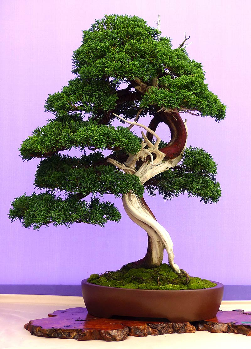 Artisans Bonsai Nursery Tampa Bonsai Trees Classes And Supplies