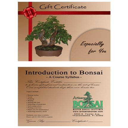 Introduction To Bonsai Class Gift Certificate 2 Students Artisans Bonsai