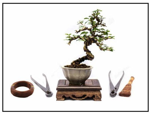 Introduction To Bonsai